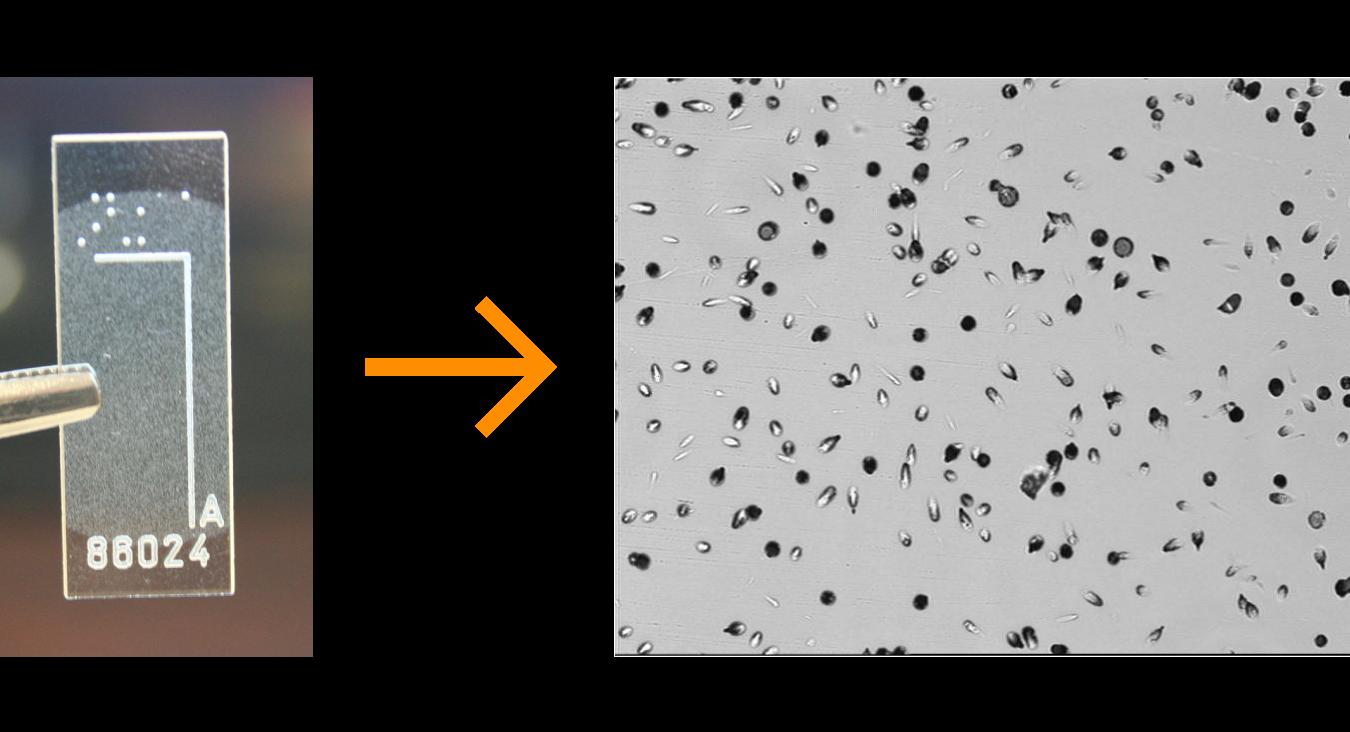 Multi Molucule